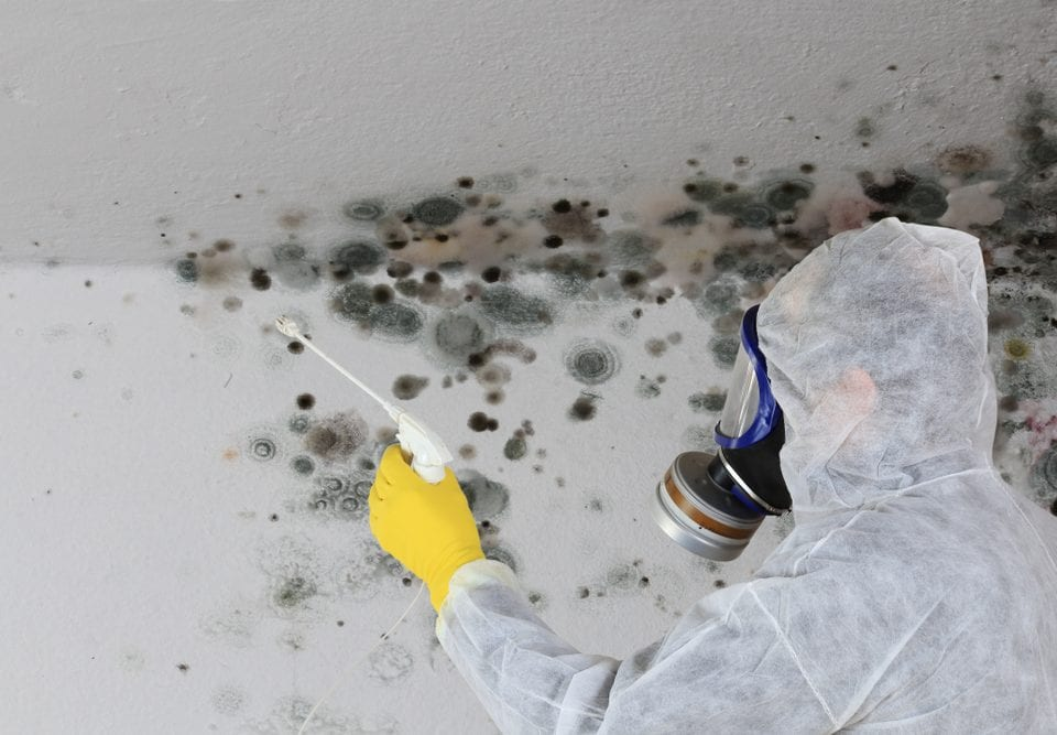 mold risks health impacts