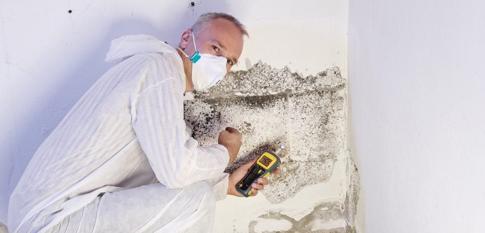 mold prevention testing removal
